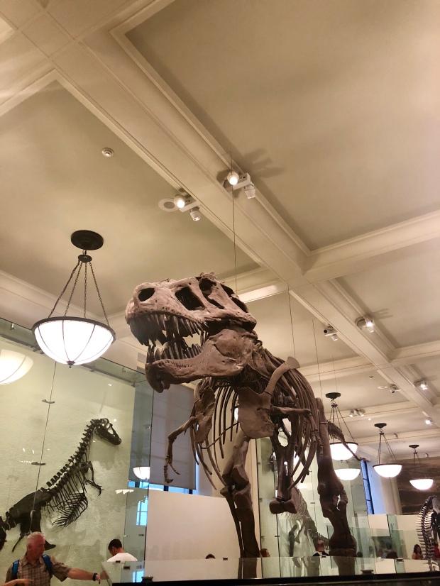 Museo di scienze naturali New York