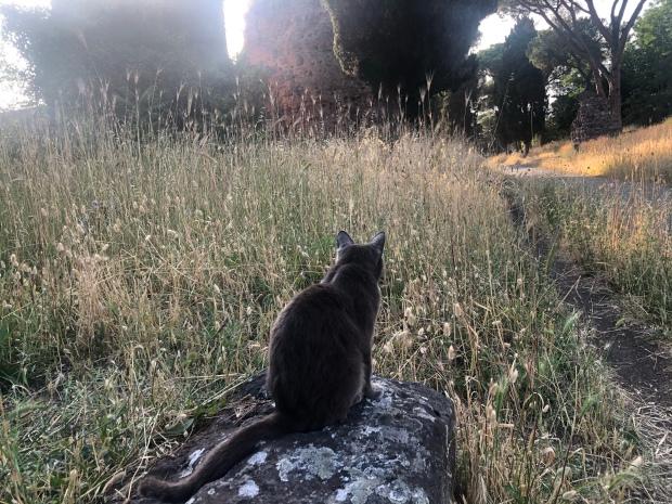 Gatto Appia antica